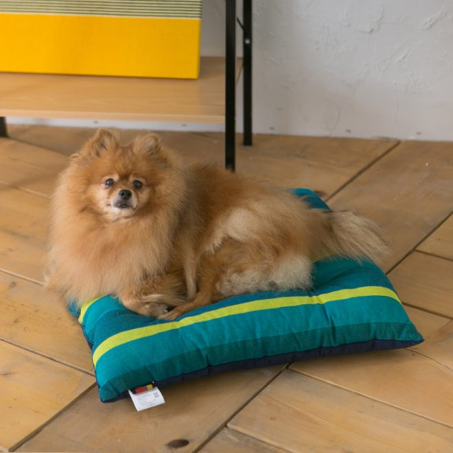 pet-cushion_BA_sungreen